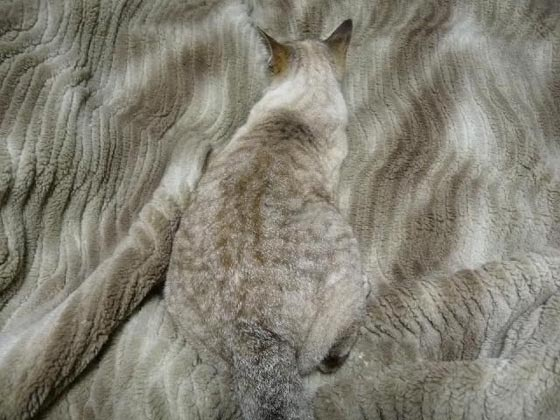 cat-camouflage_2